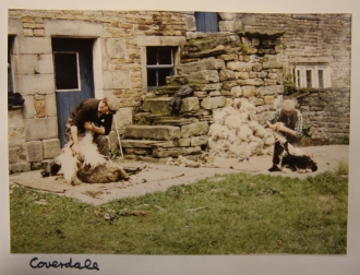 Sheep shearing in Coverdale